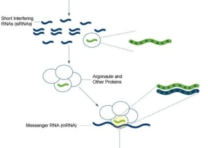progress-in-rna-interference-research
